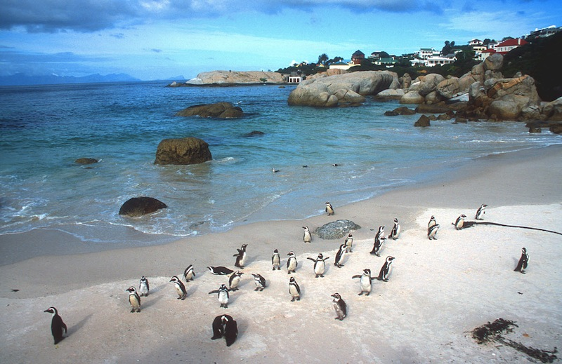 cape town penguin colony