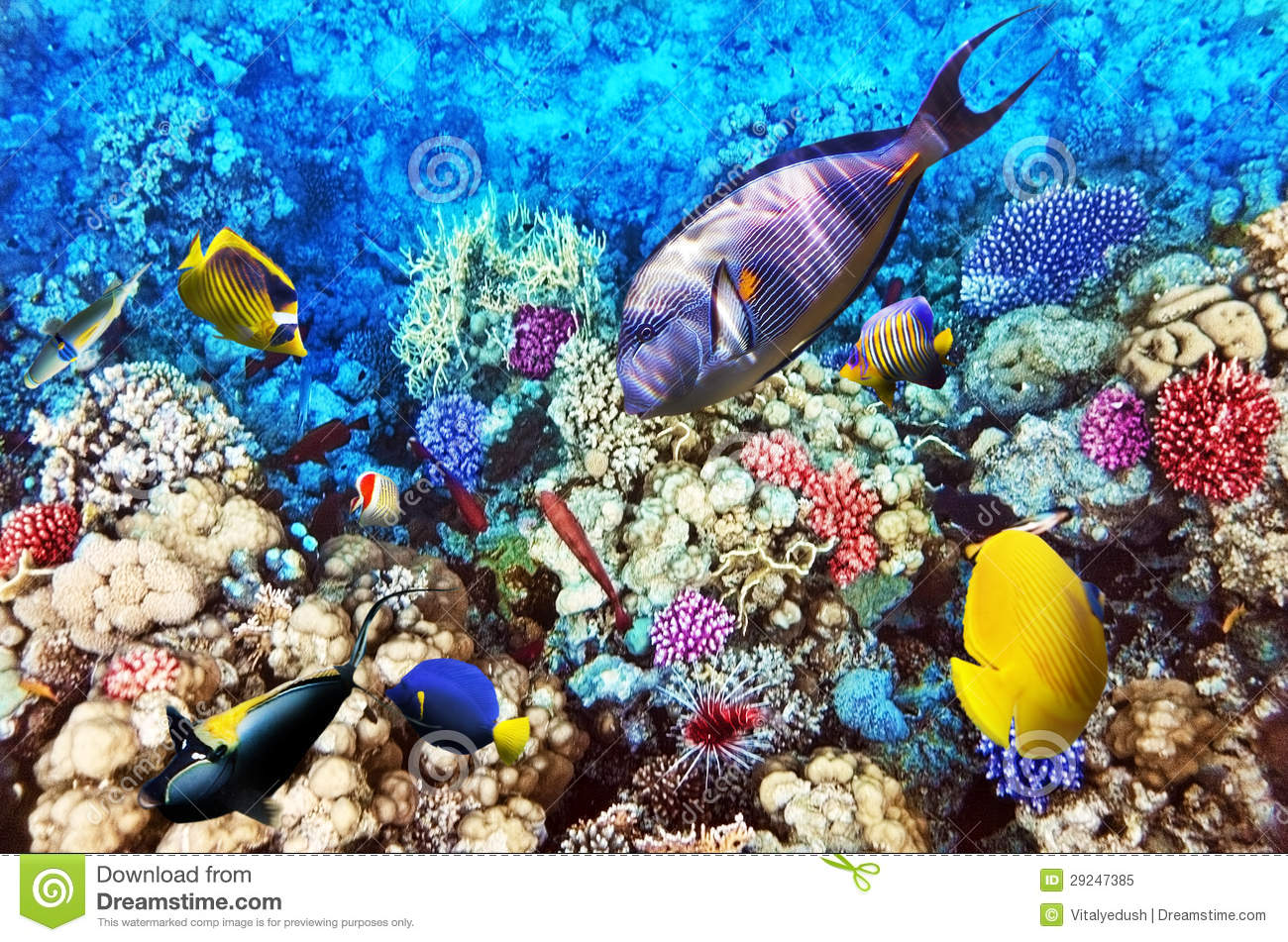 coral-fish-red-sea-egypt-africa